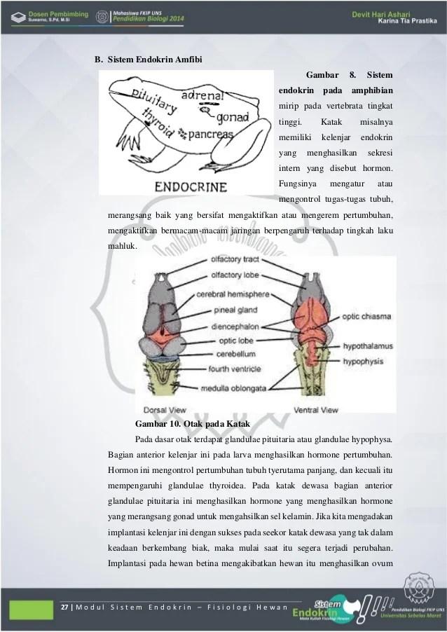 Sistem endokrin pada hewan