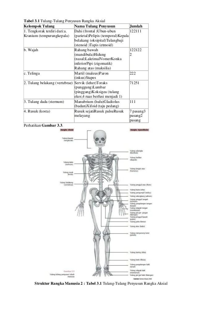 Sistem pencernaan pada manusia dan zat yang berada di lambung