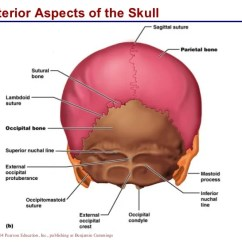 Unlabeled Skull Diagram Inferior View 2004 Dodge Stratus Power Window Wiring Superior Anatomy Www Picswe Com Posterior Aspects Of The Figure Jpg 728x546