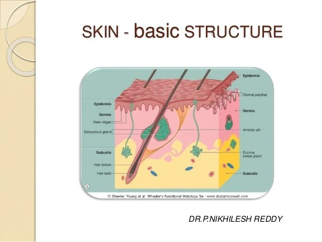 Skin structure and development