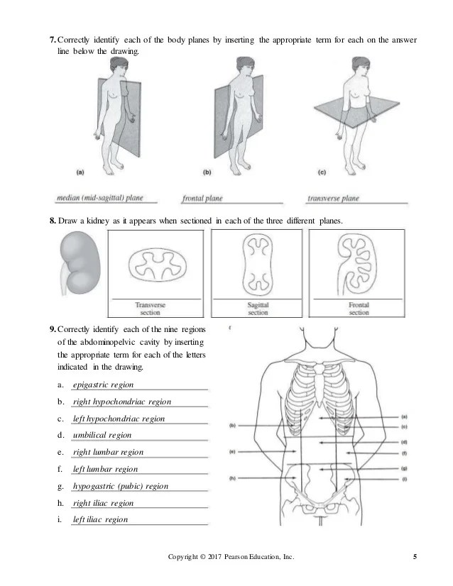 human anatomy lab manual answer