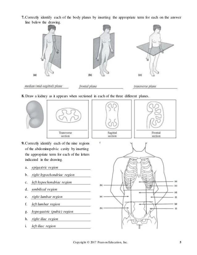 Moderno Pearson Anatomy Lab Embellecimiento - Anatomía de Las ...