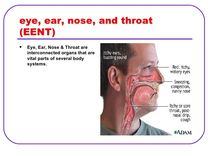 ear nose and throat diagram rv wiking spittal 22956 loadtve