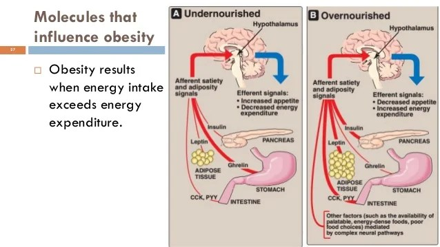 Starvation and obesity