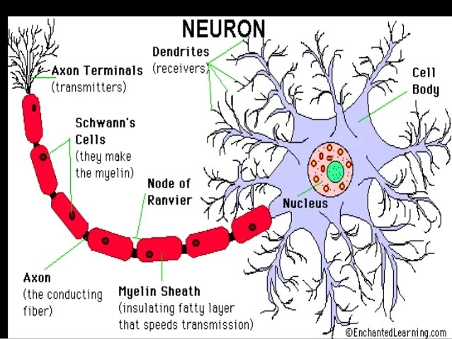 detailed neuron diagram 2004 silverado wiring structure of