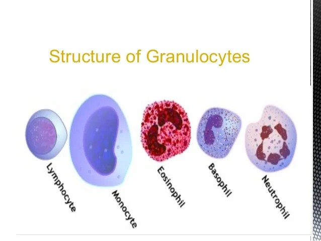 bacterial cell diagram and functions volkswagen golf audio wiring structure of wbcs