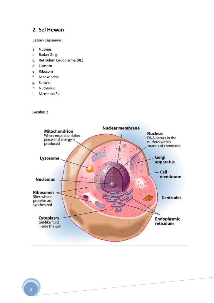 Fungsi Bagian Sel Hewan : fungsi, bagian, hewan, Stuktur, Fungsi, Bagian