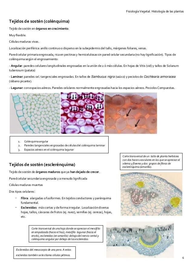 T2 histologa funcional de las plantas