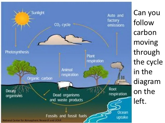 CARBON CYCLE (teach)