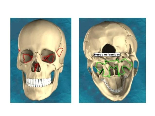 Tema 33 esqueleto de la cabeza