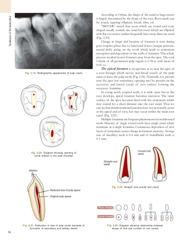 also textbook of endodontics rh slideshare