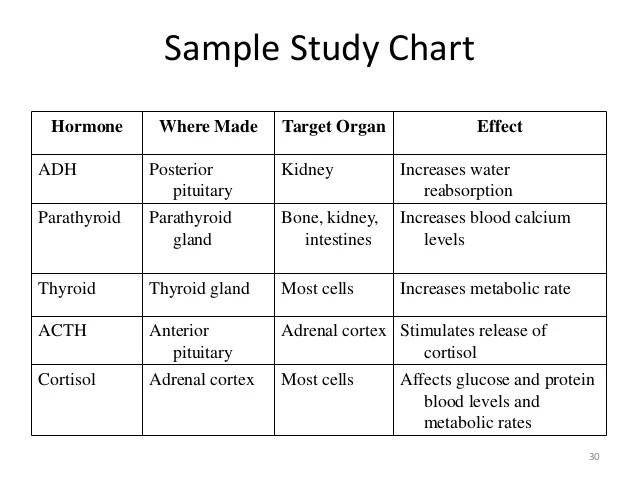 sample study chart also the endocrine system rh slideshare
