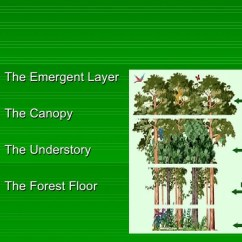 Amazon Rainforest Layers Diagram 2002 Pontiac Sunfire Wiring The Four Of Emmas Project2