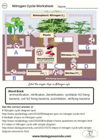The Nitrogen Cycle worksheet