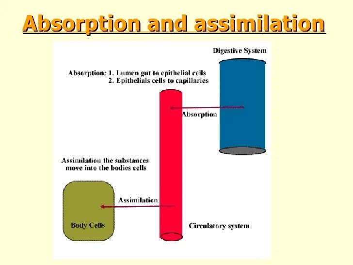 coyote teeth diagram vt wiring ib biology digestion