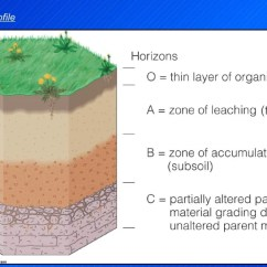 Biological Weathering Diagram Lt1 Cooling Topic 5 And Sediments1