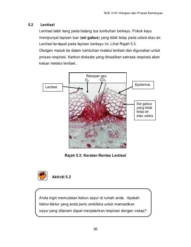 Lentisel Pada Batang : lentisel, batang, Topik, Respirasi_tumbuhan