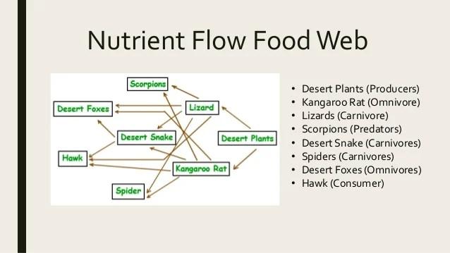 desert hawk diagram 3 gang 1 way switch wiring uk tropical period 4 plants chainfruit cholla brittle bush barrel cactus 6