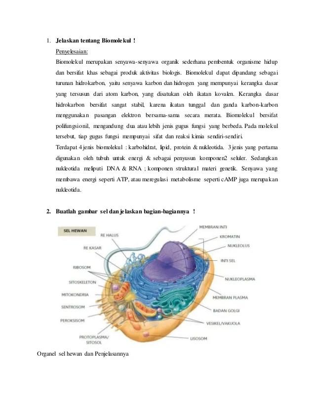 Gambar Mitokondria Dan Bagiannya : gambar, mitokondria, bagiannya, Tugas, Rutin