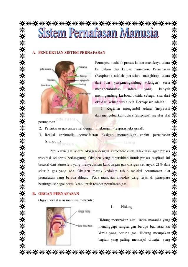 Mekanisme Sistem Pernapasan : mekanisme, sistem, pernapasan, Materi, Sistem, Pernafasan, Manusia