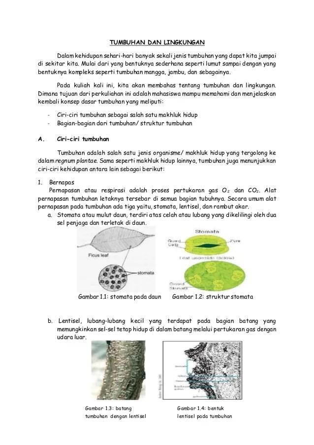 Lentisel Pada Batang : lentisel, batang, Tumbuhan, Lingkungan