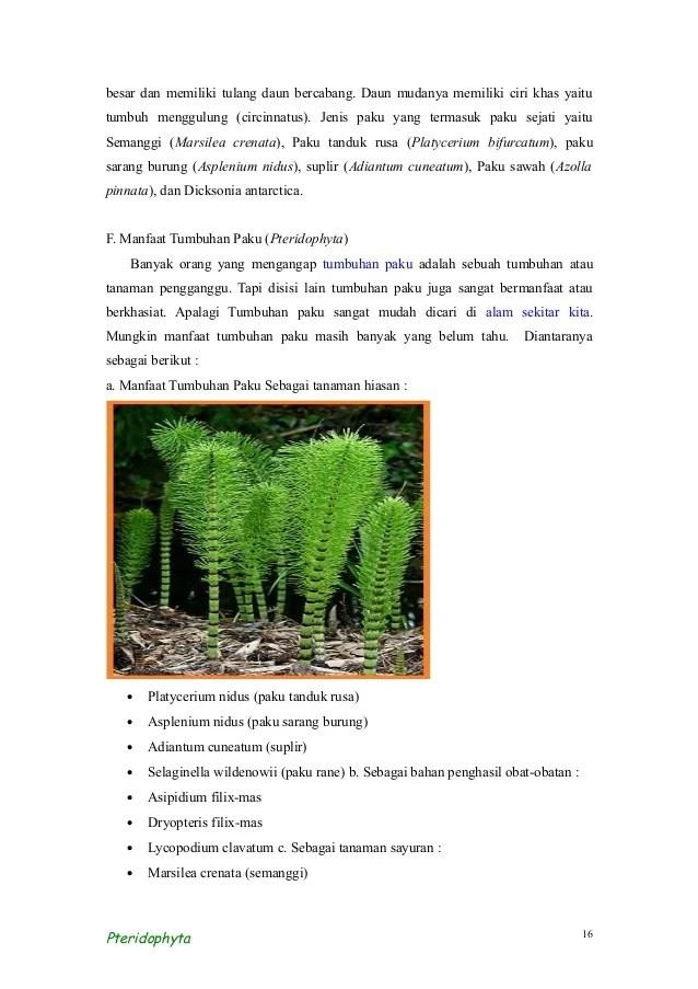 Manfaat Tumbuhan Paku Bagi Manusia : manfaat, tumbuhan, manusia, Tumbuhan