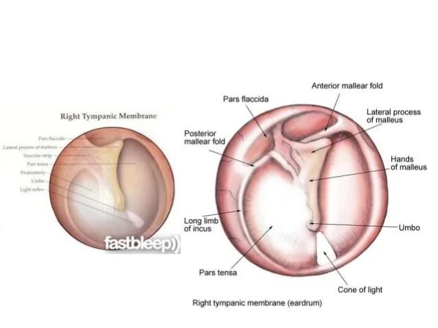 ear tympanic membrane diagram 2002 ford focus starter