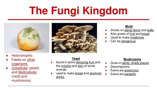 Unit 2 natural science monera protoctista and fungi
