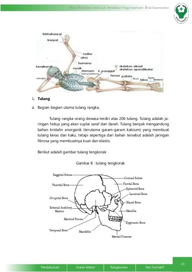 Sistem Integumen dan Muskuloskeletal