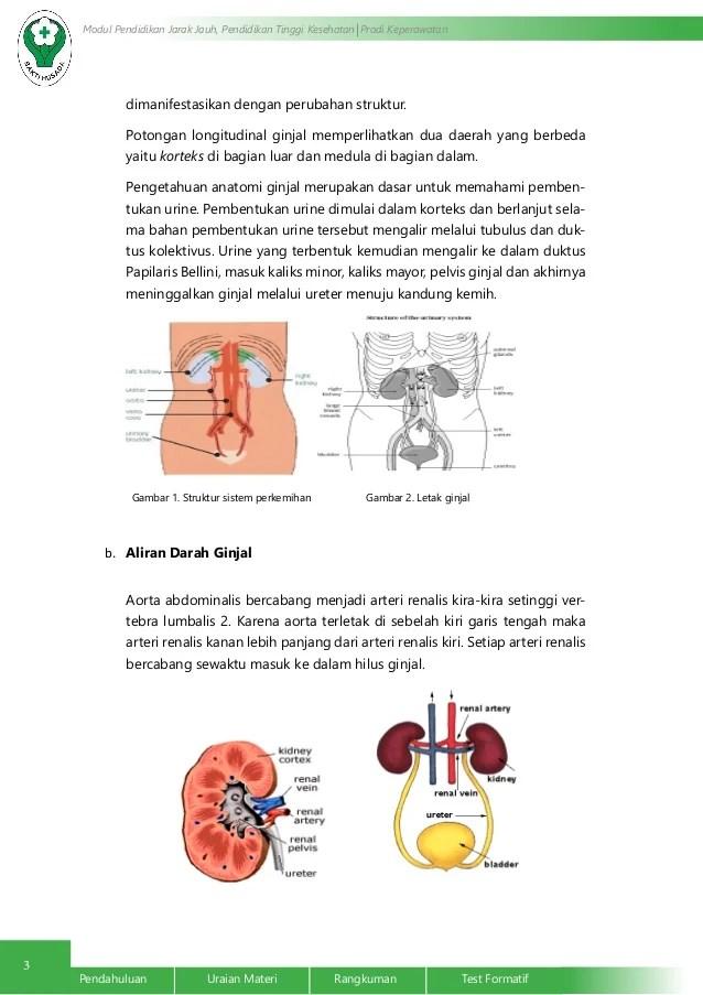 Anatomi dan Fisiologi Ginjal dan Saluran Perkemihan