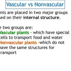 Non Vascular Plant Diagram 2006 Nissan X Trail Wiring And Plants