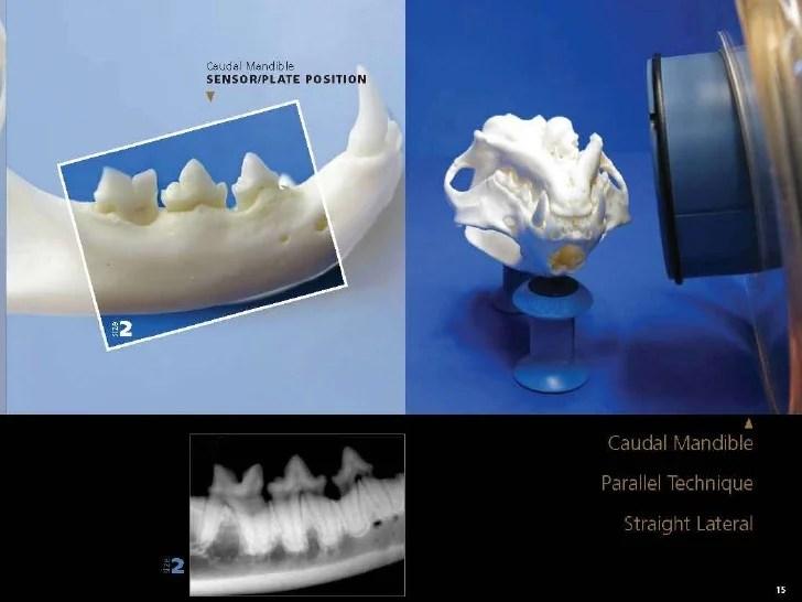 also veterinary dental radiography simplified rh slideshare