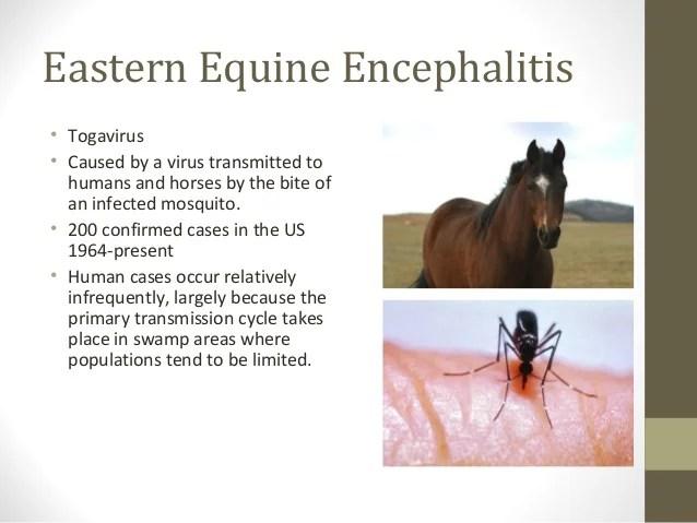 Acute Viral encephalitis Dr Shatdal Chaudhary