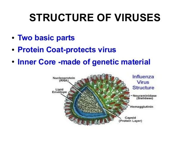 And Parts Two Main What Are They Are Virus Where Virus