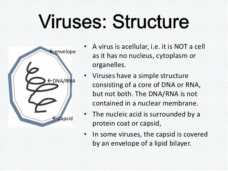 virus diagram worksheet simple electrical wiring diagrams viruses bacteria protists and fungi 6