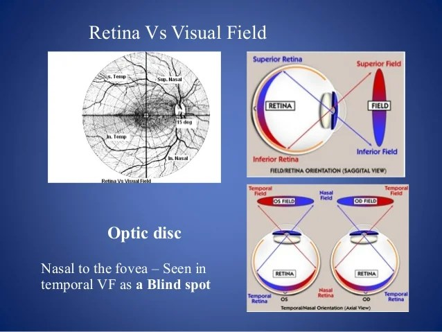 retina vs visual field also testing and interpretation rh slideshare