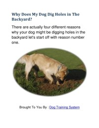 4 Reason why dog digging in the backyard. Learn how to ...