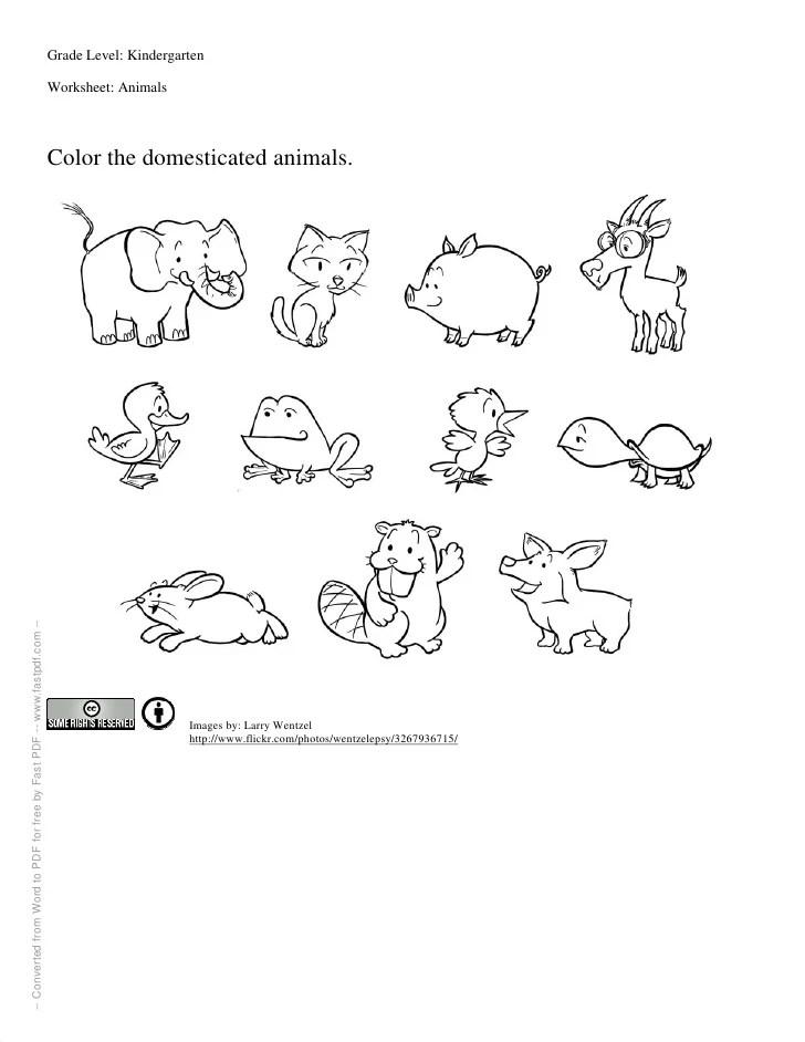 Grade level kindergarten worksheet animals also for kindergartners rh slideshare