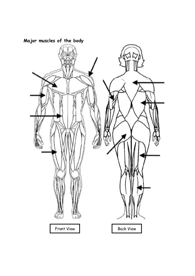 upper arm muscle diagram human albright winch solenoid wiring work sheets