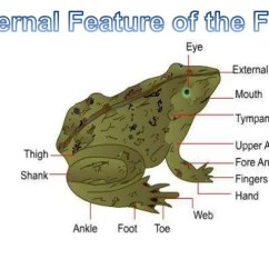 Frog Head Diagram Labeled Gas Interlock System Wiring Zoology(external Features Of The & Buccal Cavity)