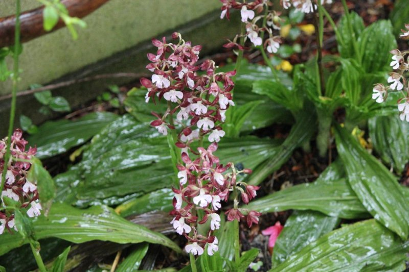 花も毒も一級   ひこじいさんのブログ - 楽天ブログ