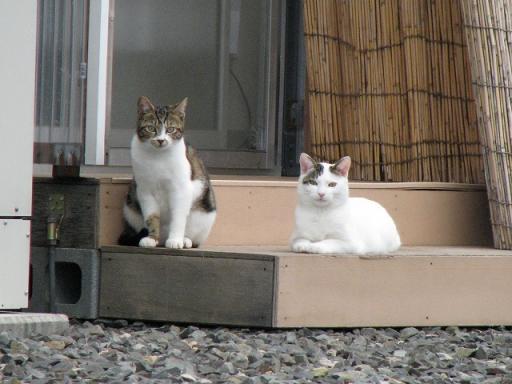 門前仮設住宅の子猫【里親募集中】