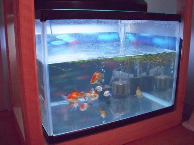 金魚水槽白濁 | 出目金魚ぶろぐ - 楽天ブログ