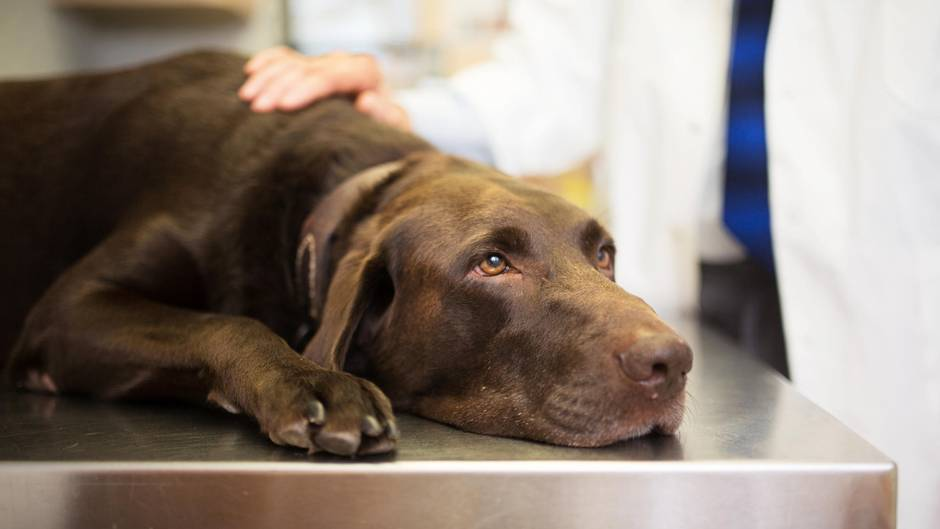 Krebs Beim Hund Wer Früher Sterben Musste Kann Heute Oft