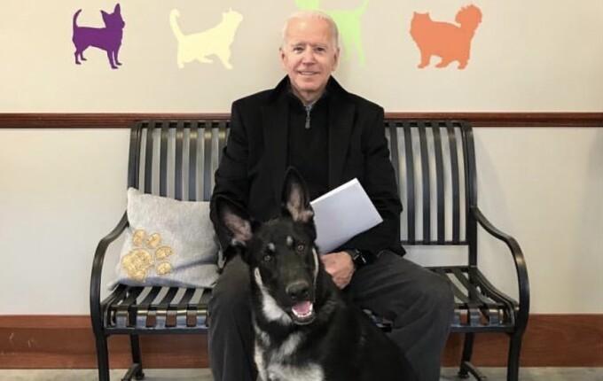 Ciobănescul german al lui Joe Biden, primul câine salvat de la adăpost care  ajunge la Casa Albă - Stirileprotv.ro