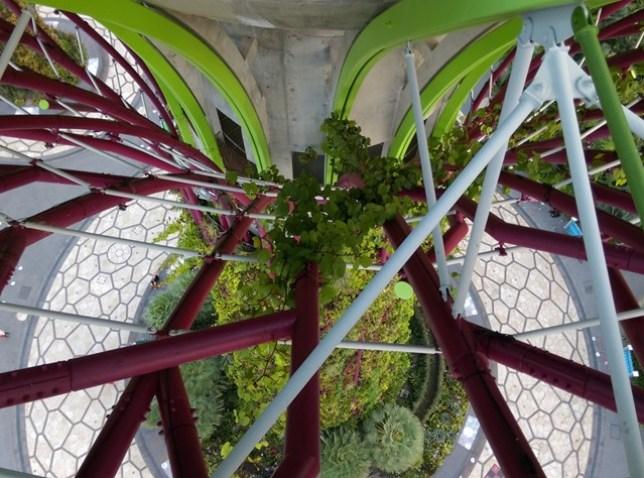 gardenbythebay15 Singapore-IndoChine-Gardens by the Bay中SuperTree上享受美食享受美景