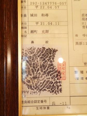 1379605269-1489760284-e1439051652665 Kobe-神戶牛排ビフテキのカワムラBifteck Kawamura軟嫩神戶牛Q彈大鮑魚