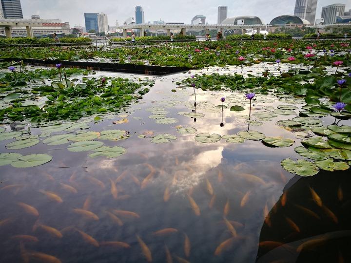 marinabay41 Singapore-Marina Bay晨景 感受新加坡最美的濱海灣