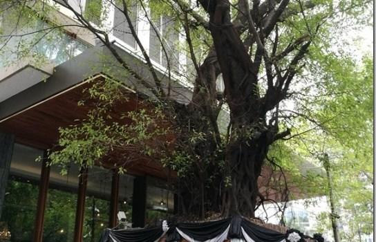 Bangkok-曼谷無線路英迪格酒店 (Hotel Indigo Bangkok Wireless Road) 融入在地特色旅店