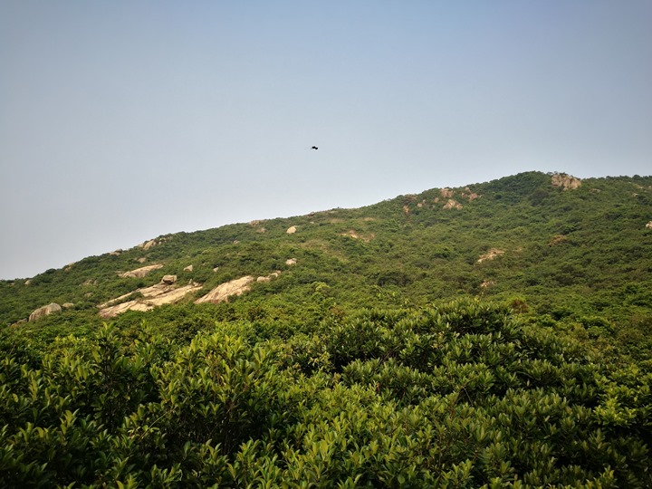 dragonbackmt.27 HK-亞洲最美市區行山徑-龍脊(港島徑第8段)